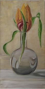 Tulip in a vase by Alina Craciun