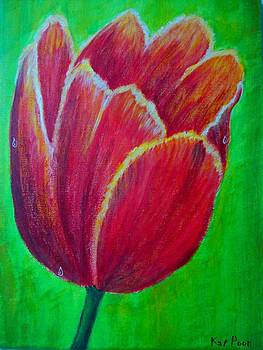 Tulip In Bloom by Kat Poon