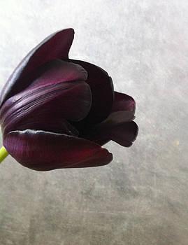Tulip by Kristina Granholm