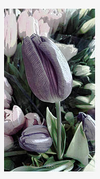 Tulip by Michelle Frizzell-Thompson