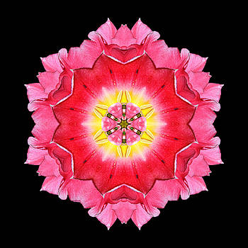 Tulip Peach Blossom I Flower Mandala by David J Bookbinder