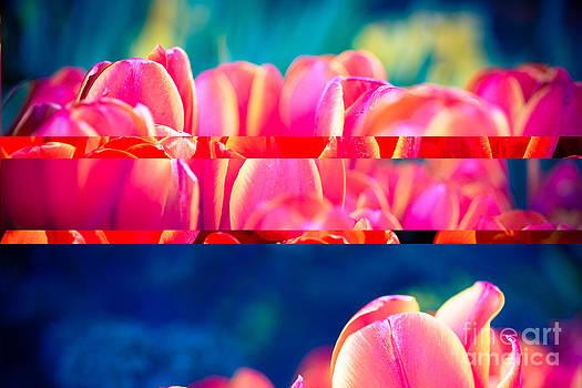 Sonja Quintero - Tulip Splits
