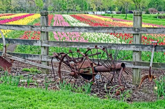 Tulip time by Cheryl Cencich