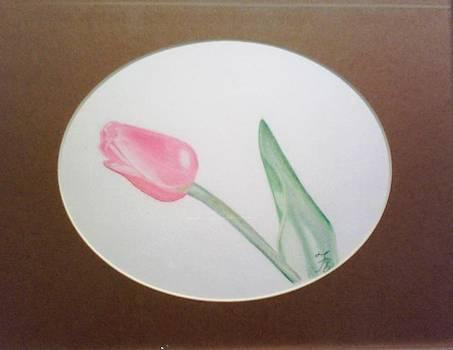 Tulip - Tulipan by Fabiola Rodriguez