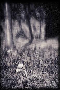 Silvia Ganora - Tulips and tree shadow