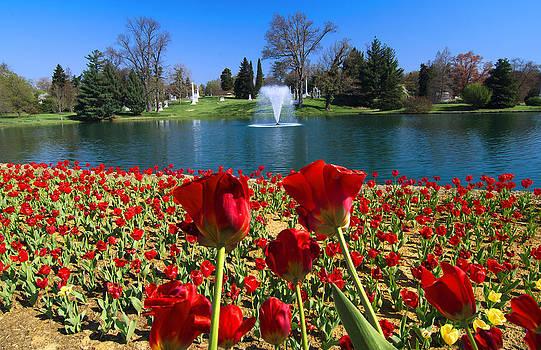 Randall Branham - Tulips at the Lake