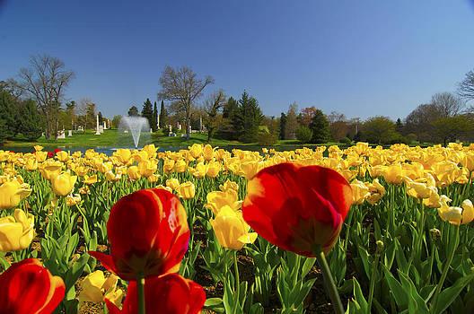 Randall Branham - Tulips Galore