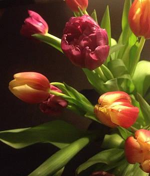 Tulips by Kristina Granholm