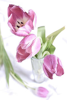 Tulips on White by Gina Harmeyer
