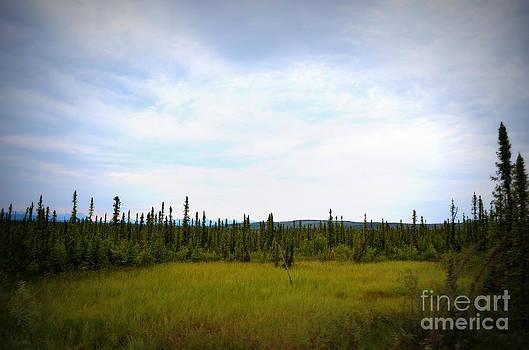 Tundra by Kiana Carr