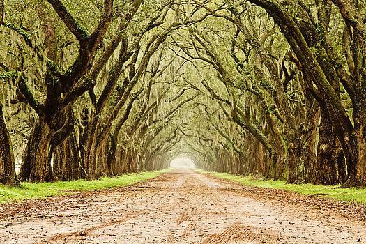 Scott Pellegrin - Tunnel in the Trees
