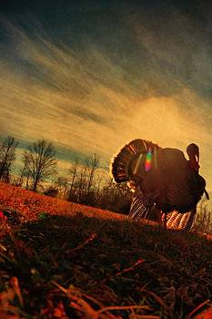 Turkey Dreams by Emily Stauring