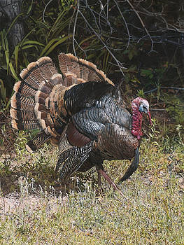 Turkey in the Weeds by Joshua Martin