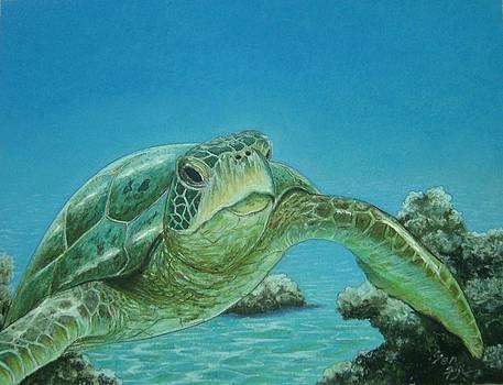 Turtle Between Rocks by Pravin  Sen