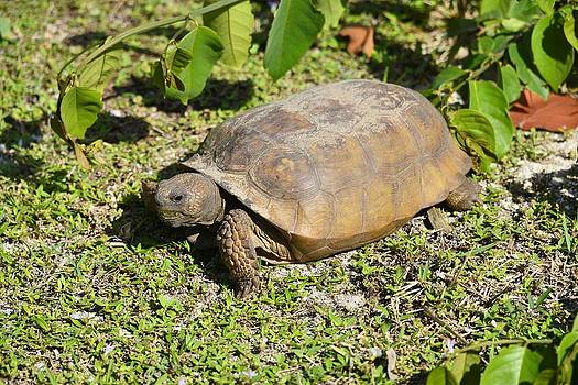 Turtle  by Bill Hosford