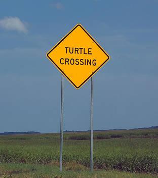Turtle Crossing by Kim Pate