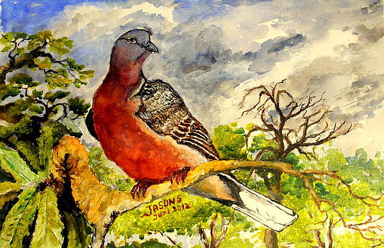 Turtle - Dove by Jason Sentuf