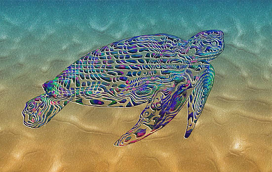 Jack Zulli - Turtle