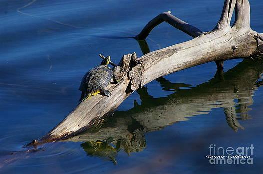 Tannis  Baldwin - Turtle Sun