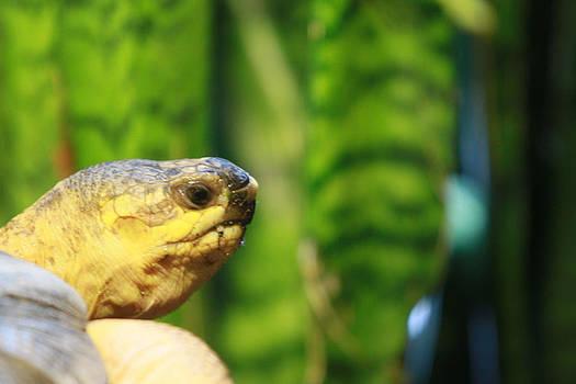 Turtle by Tinjoe Mbugus