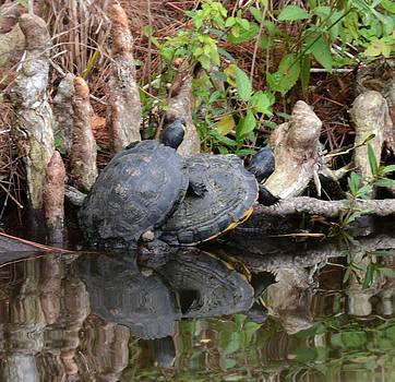 Turtles  by Julie Cameron