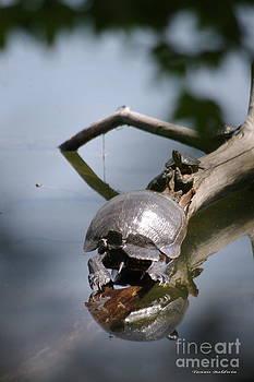 Tannis  Baldwin - Turtles sunning
