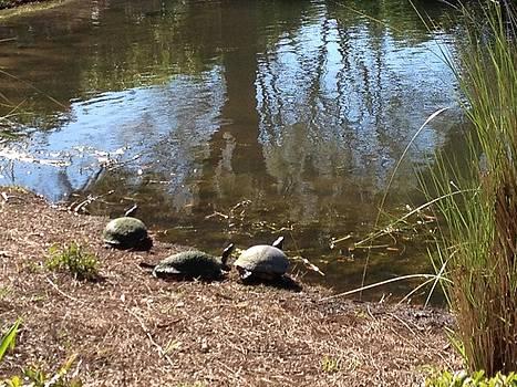Turtles Three by Jim Hubbard