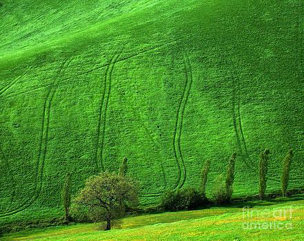 Tuscan hills 05 by Giorgio Darrigo