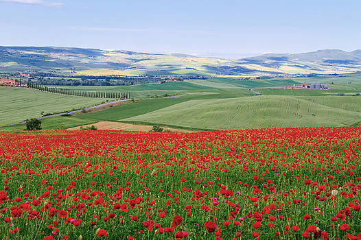 Tuscan Poppy Field by Daniel Sands