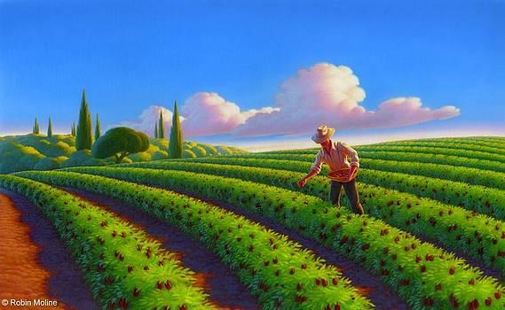 Tuttorosso Field by Robin Moline