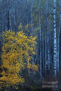 Twilight by Winston Rockwell