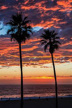 Twin Palms by April Reppucci