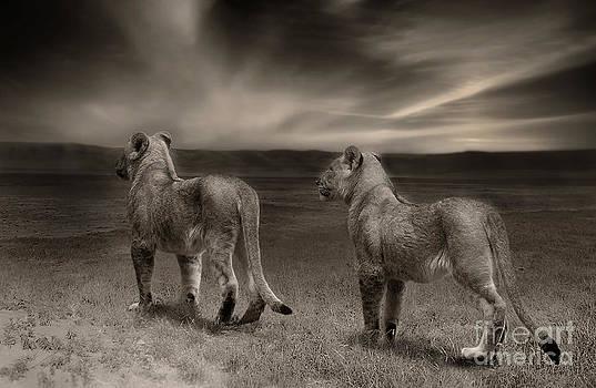 Twins 2 by Christine Sponchia