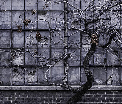 Twisted Decay - Abstract Metaphor  by Steven Milner