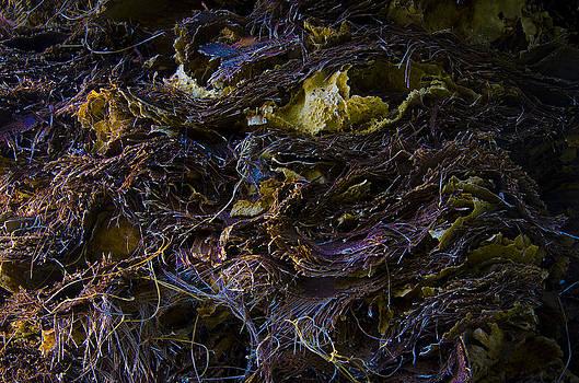 Twisted Nature II by Anna Azmitia