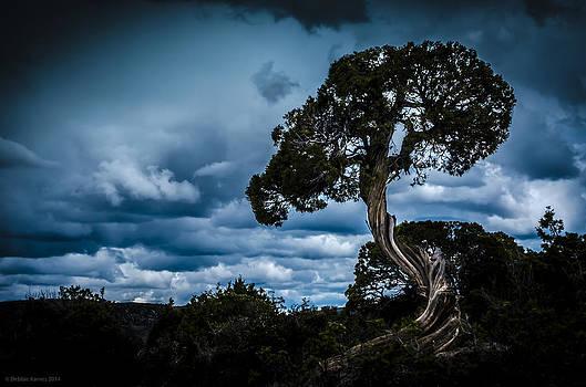 Twisted Sky II by Debbie Karnes