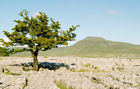 Twisted Tree Flat Mountain Ingleborough by Tess Baxter