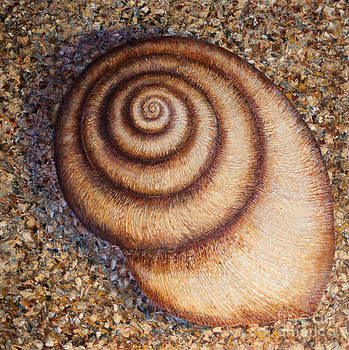 Twisty Shell by Sloane Keats