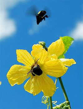 Two Black Bees by Don Bangert