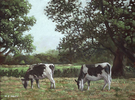 Martin Davey - Two Cows in field at Throop Dorset UK