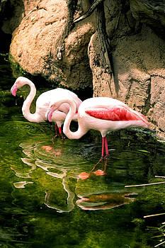 Two flamingos by Goyo Ambrosio