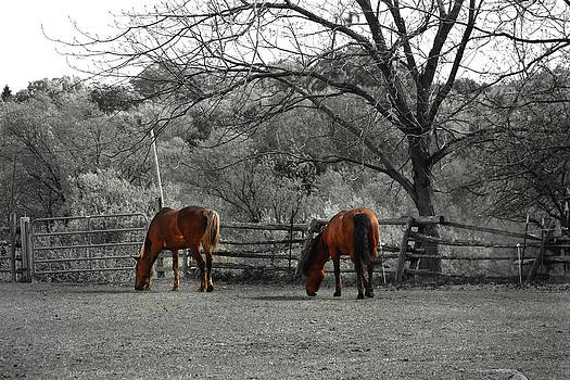 Two Horses by Mary Burr