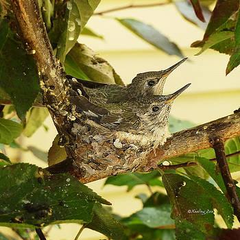 Xueling Zou - Two Hummingbird Babies in a Nest 2
