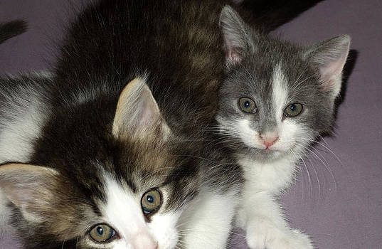Two kittens by Diane Lent