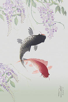 Two Koi and Wisteria Blossoms by Matthew Schwartz