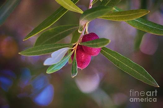 Two Olives Please by Marcia Breznay