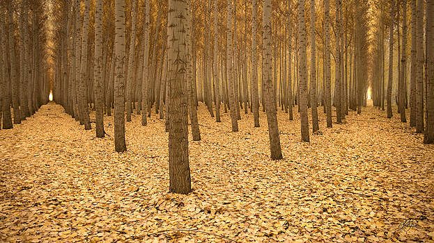 Two Roads Diverged in a Yellow Wood by Lori Grimmett