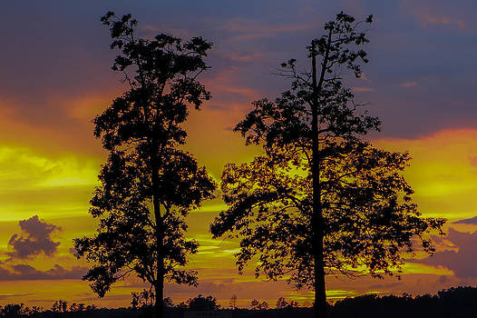 Two Trees in the Sunset  by Brian Villanueva
