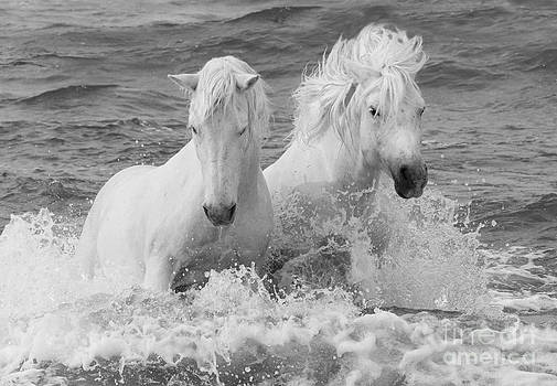 Two White Horses in the Waves by Carol Walker
