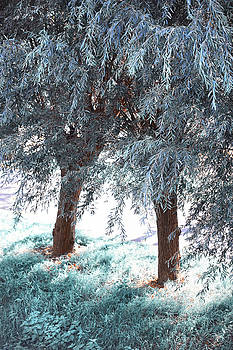 Jenny Rainbow - Two Willows